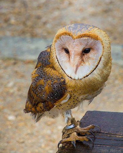 Love bird | Flickr - Photo Sharing!