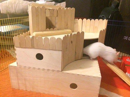 Image result for hamster friendly diy toys