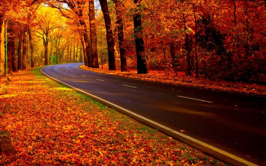 These 203 Beautiful Autumn Photos Will Inspire You