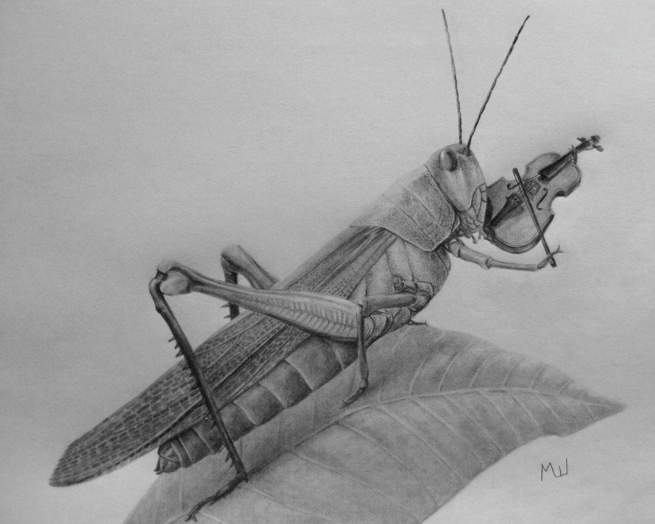 Pencil drawing of a grasshopper by miroslav sunjkic the pencil maestro pencil drawing grasshopper insects violin maestro