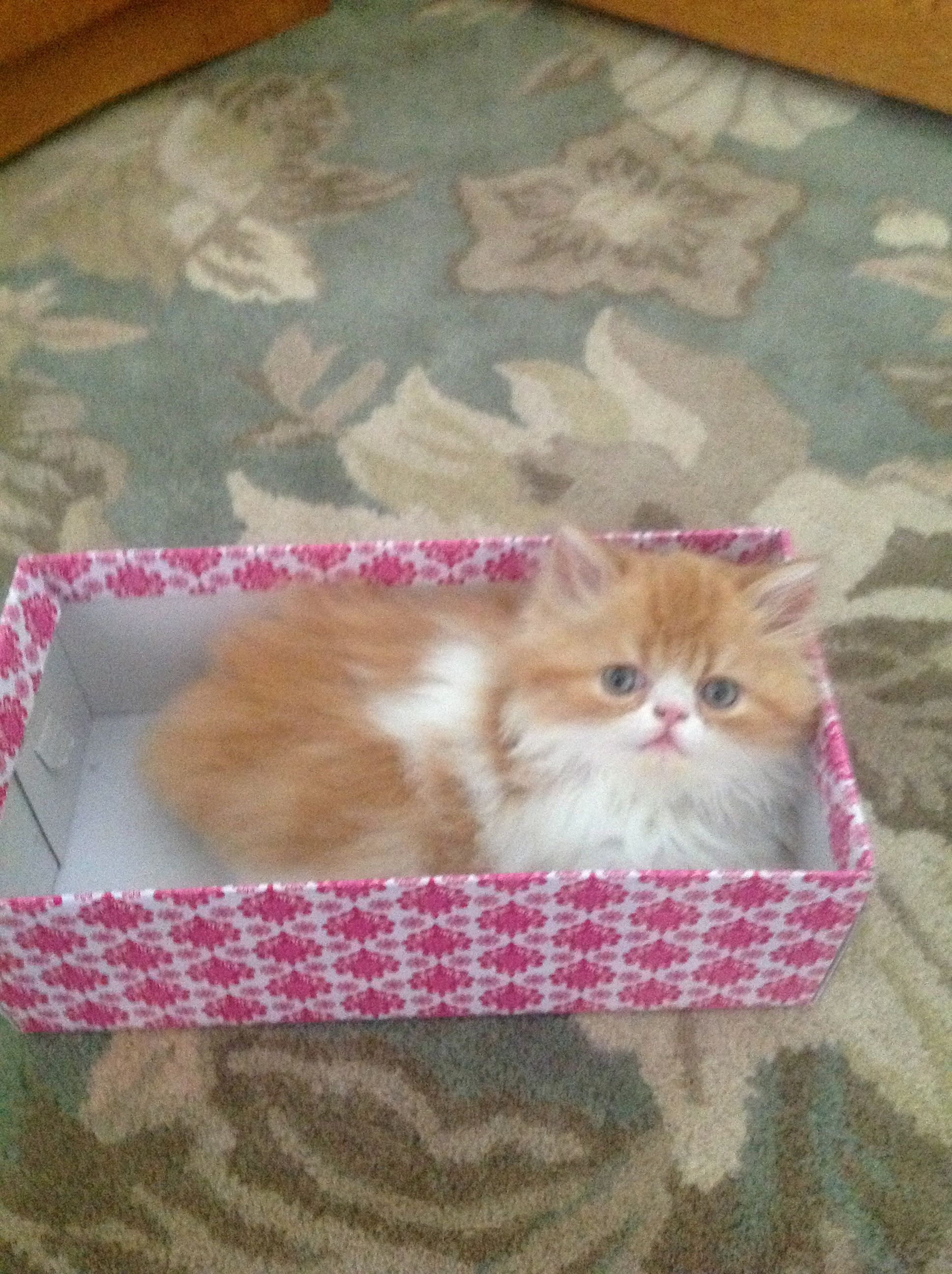 Pin By Hilda On Persian Cats Persian Cat Cats Kitty