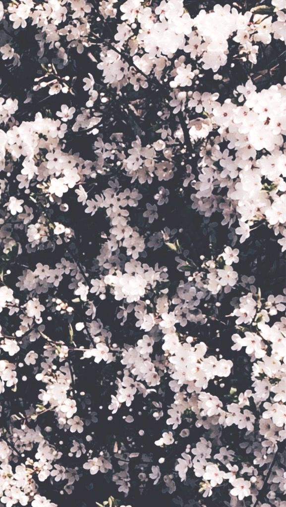 Flowers tumblr editing in 2018 pinterest flowers wallpaper flowers tumblr wallpaper backgrounds iphone wallpaper phone backgrounds instagram background aesthetic mightylinksfo
