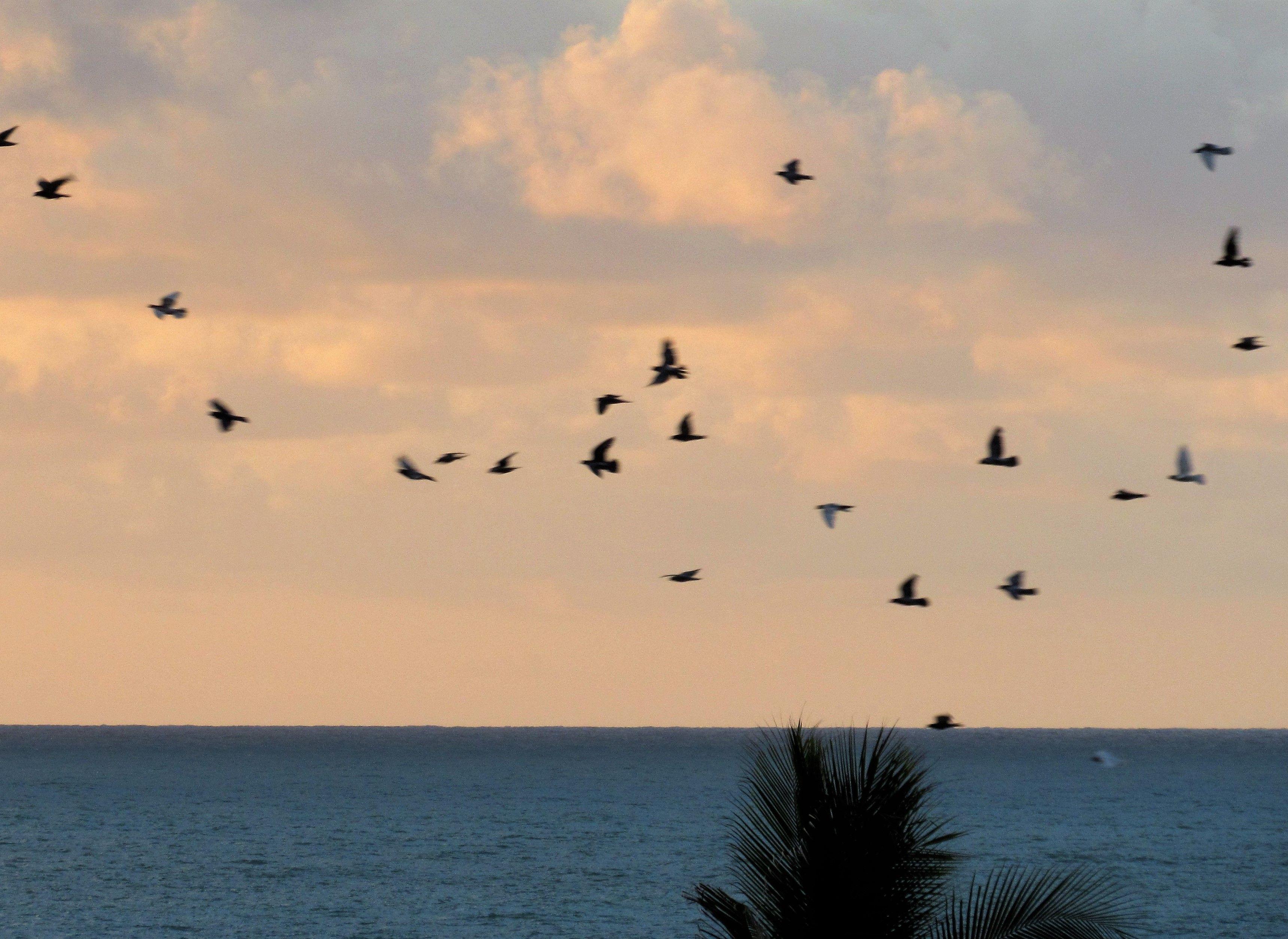 infinity of little birds