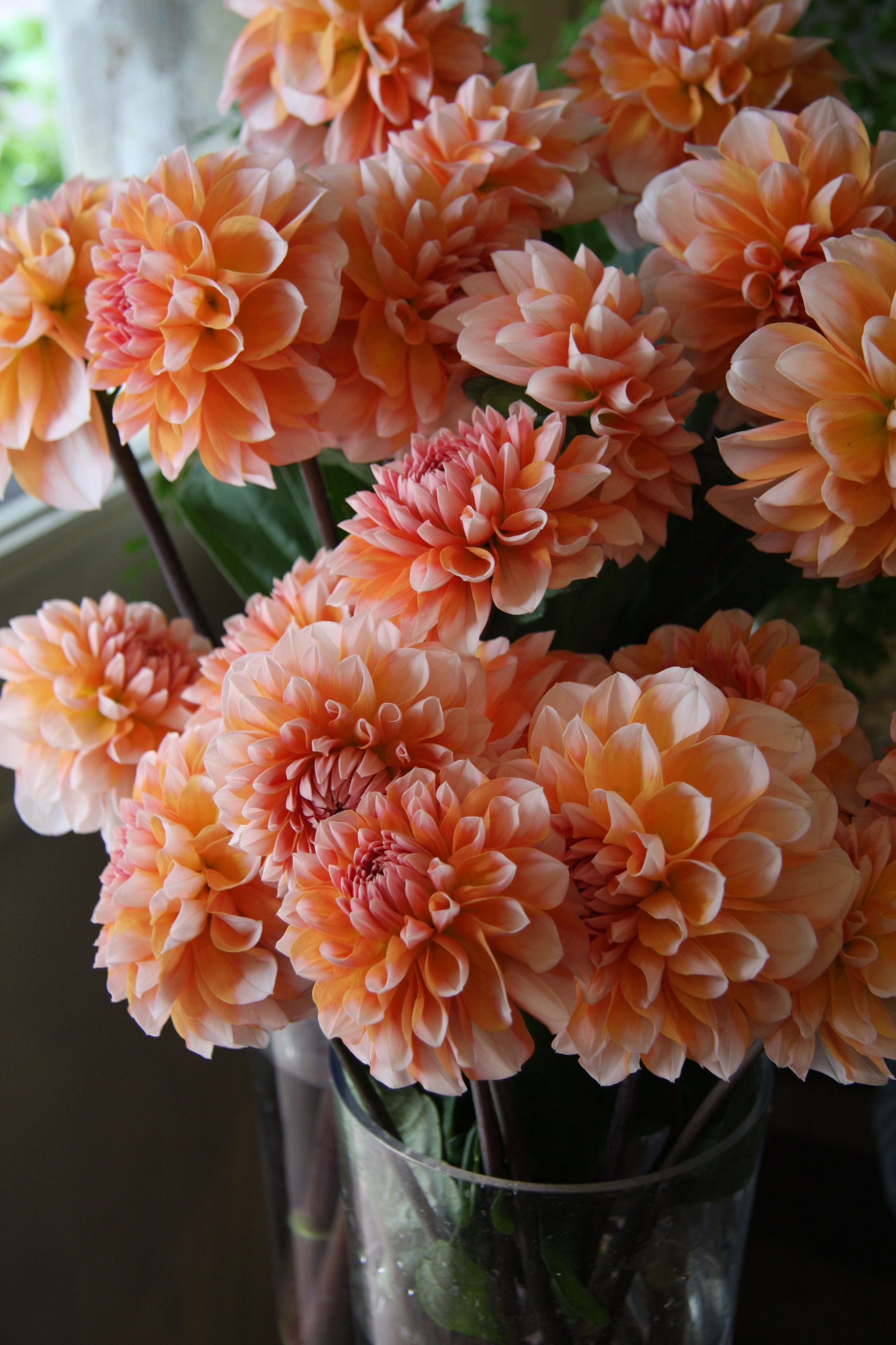 love these Dahlias, not sure how they would look with roses ...