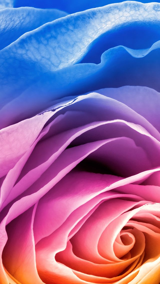 Rainbow Rose Iphone Wallpapers With Images Rose Wallpaper