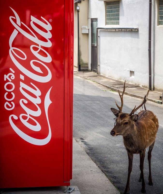 Fan de Coca Cola #daim #japon #miyajima #pub #marketing #consommation #voyage