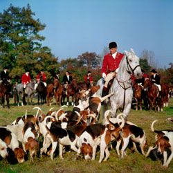 Top 10 Hunting Dog Breeds Hunting Dogs Fox Hunting Dog Breeds