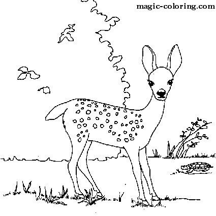 MAGIC-COLORING | Deer coloring pages | Hand Embroidery | Pinterest ...