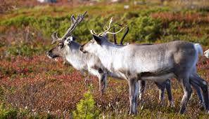 Kuvahaun tulos haulle suomalaiset eläimet