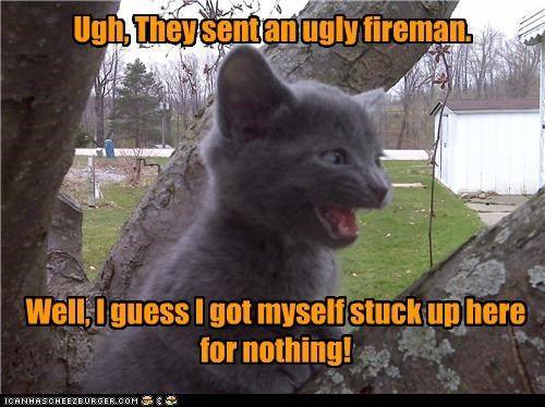 c52587e9ede456102838791e2fbc9069 hot firefighter meme google search a meow massages the heart