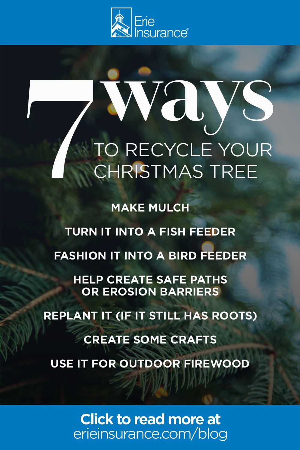 How to Recycle Your Christmas Tree in 2020 Live