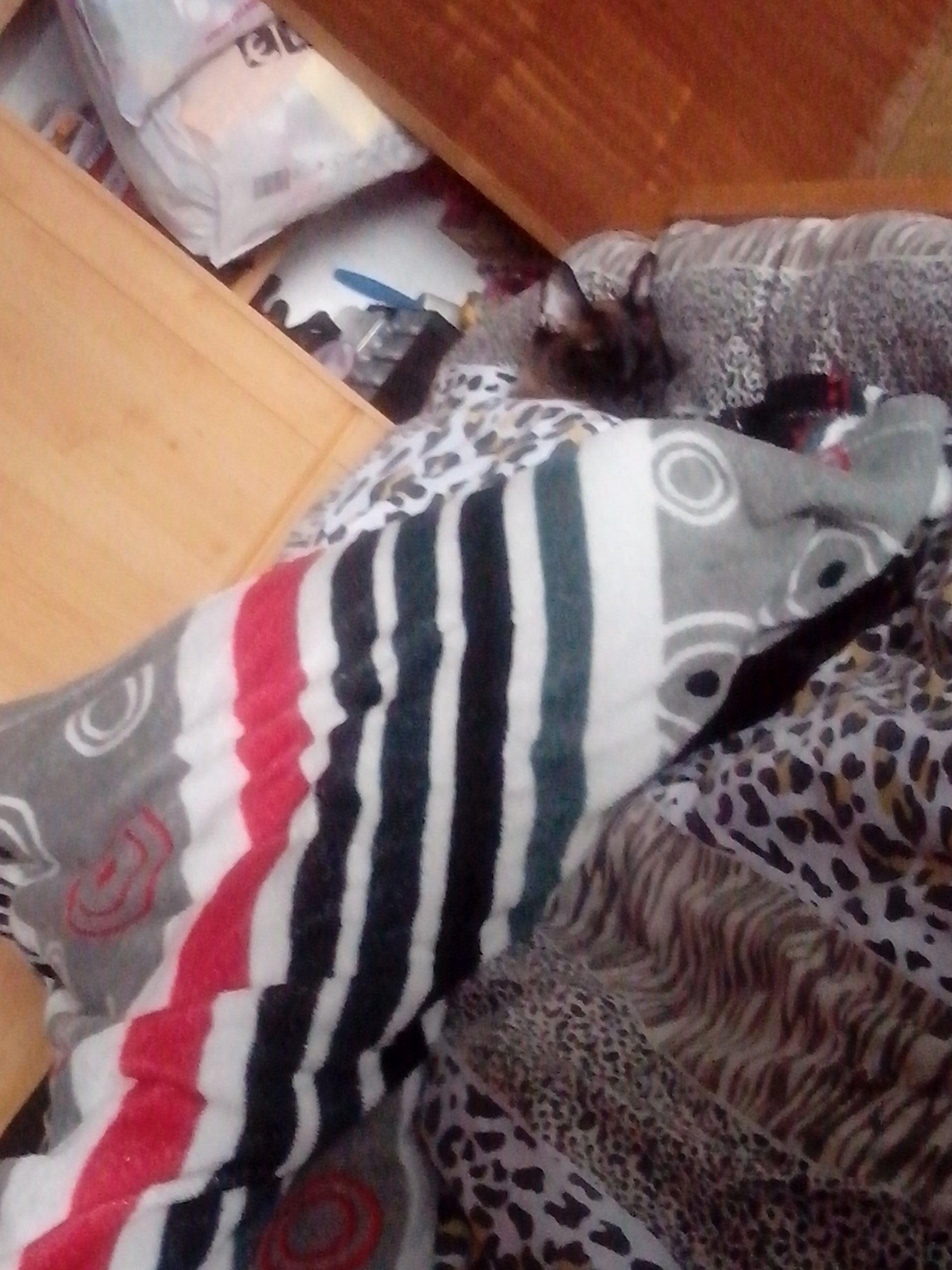 vuelvo de trabajar y me encuentro con que mi gatete me a quitado la cama xD