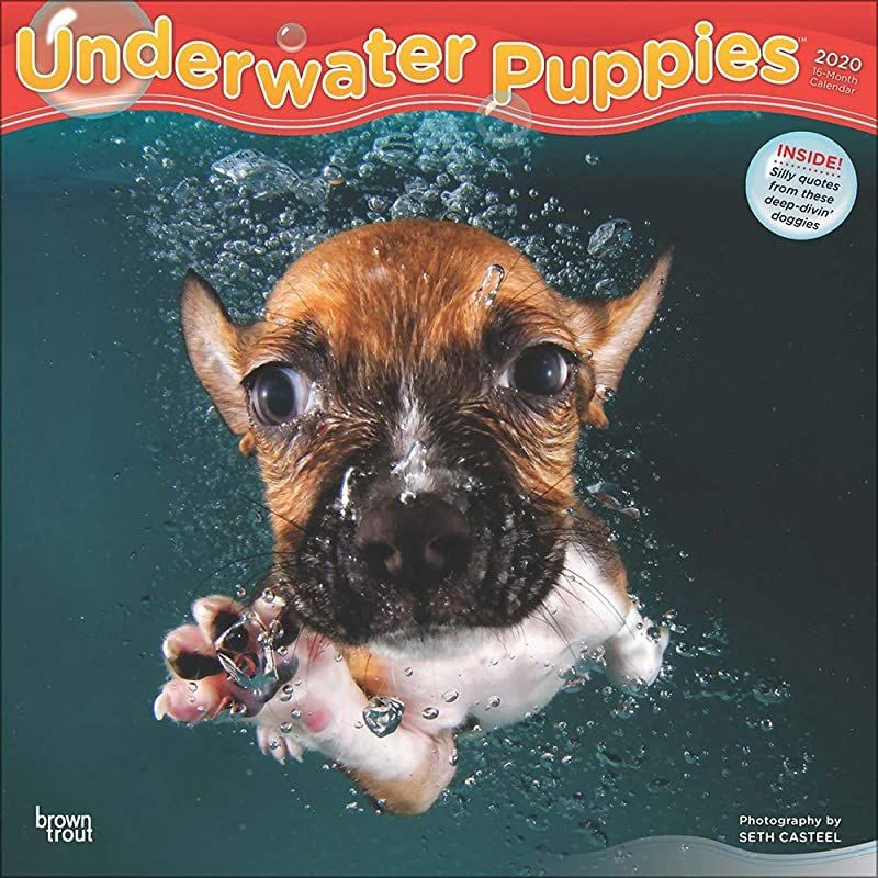 Read Book Underwater Puppies 2020 12 X 12 Inch Monthly Square Wall Calendar Pet Humor Puppy By In 2020 Ebook Free Pdf Books Free Reading