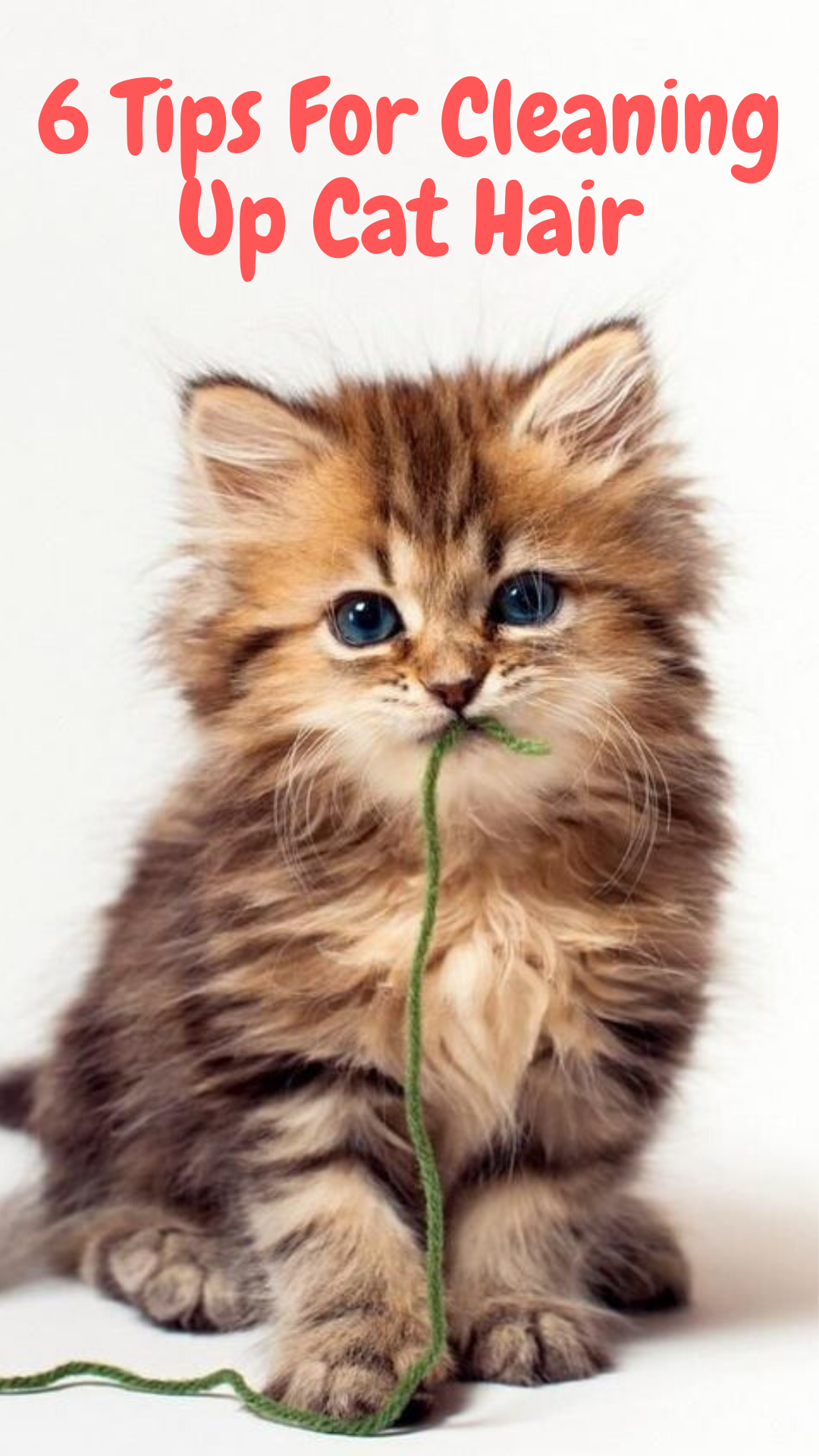 6 Tips For Cleaning Up Cat Hair Found cat, Cats, Cat facts