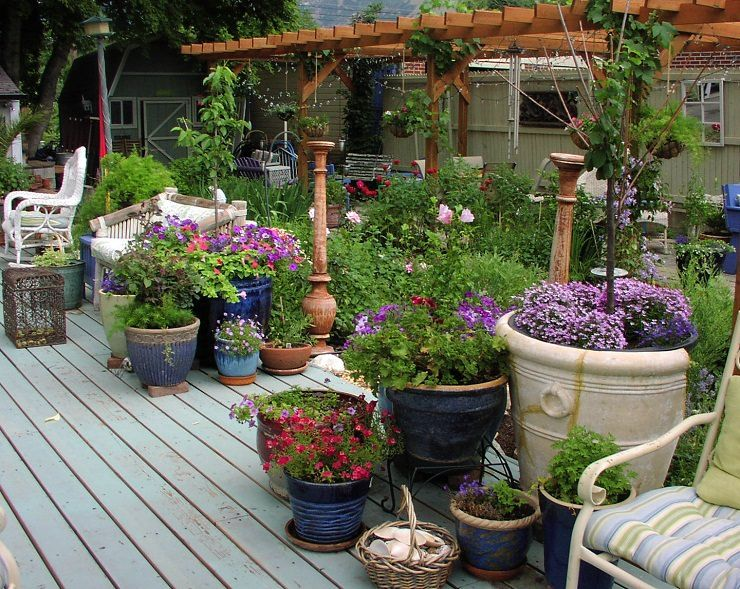 How Not To K*Ll Plants In Containers 13 Most Important 400 x 300