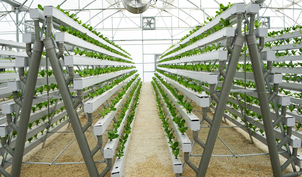 Diy hydroponic aframe build grow 168 plants in a 6 x 10