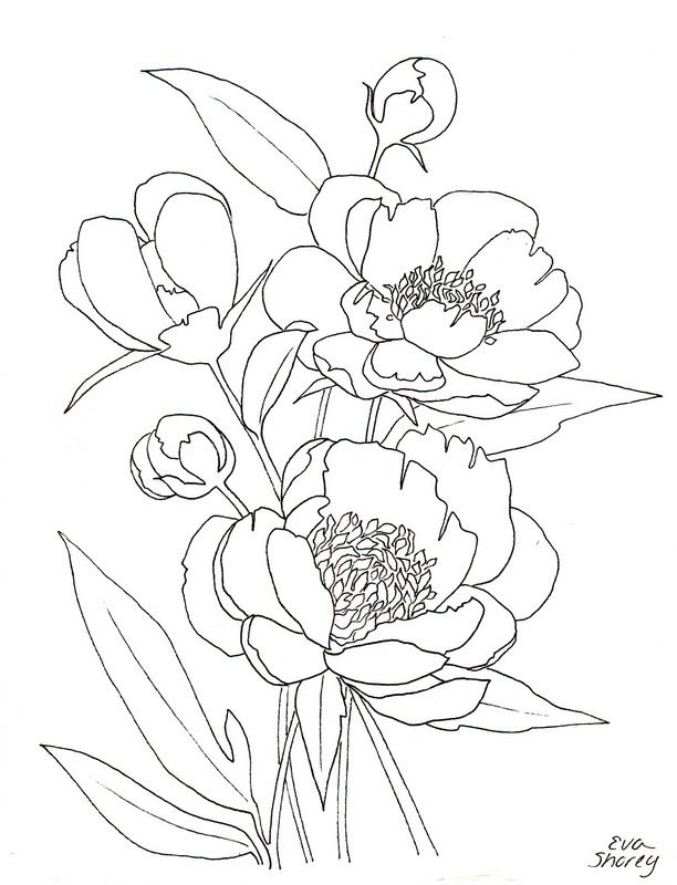 Botanical Flower FREE Coloring Page By Eva Shorey Pink Peony Can Paint For An Inexpensive Wall Hanging
