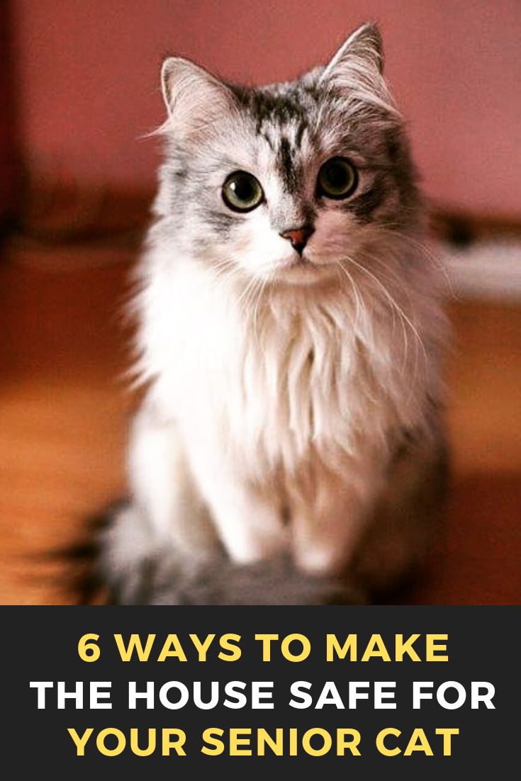 6 Ways To Make The House Safe For Your Senior Cat Cats Cat Catsofinstagram Of Catstagram Beautifulcats Pets Catlover Cats Senior Cat Kitten Adoption