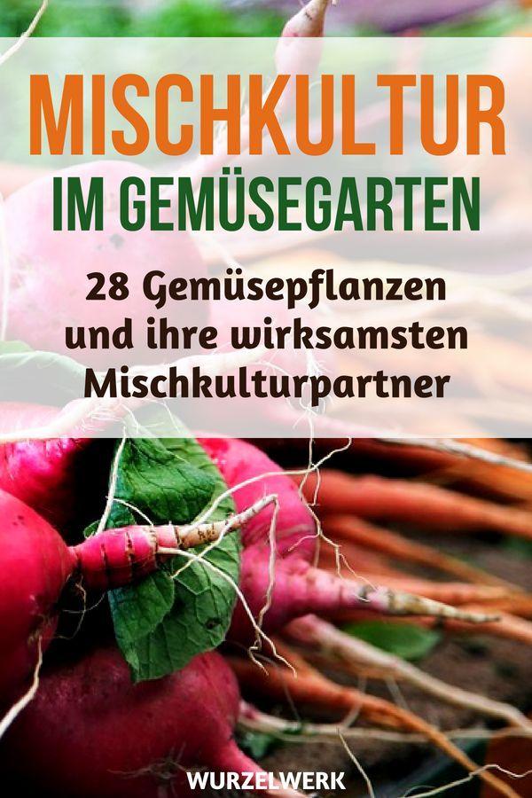 28 Gemüsearten und ihre wirksamsten Mischkultur-Partner + Beispielplan #tomatenzüchten