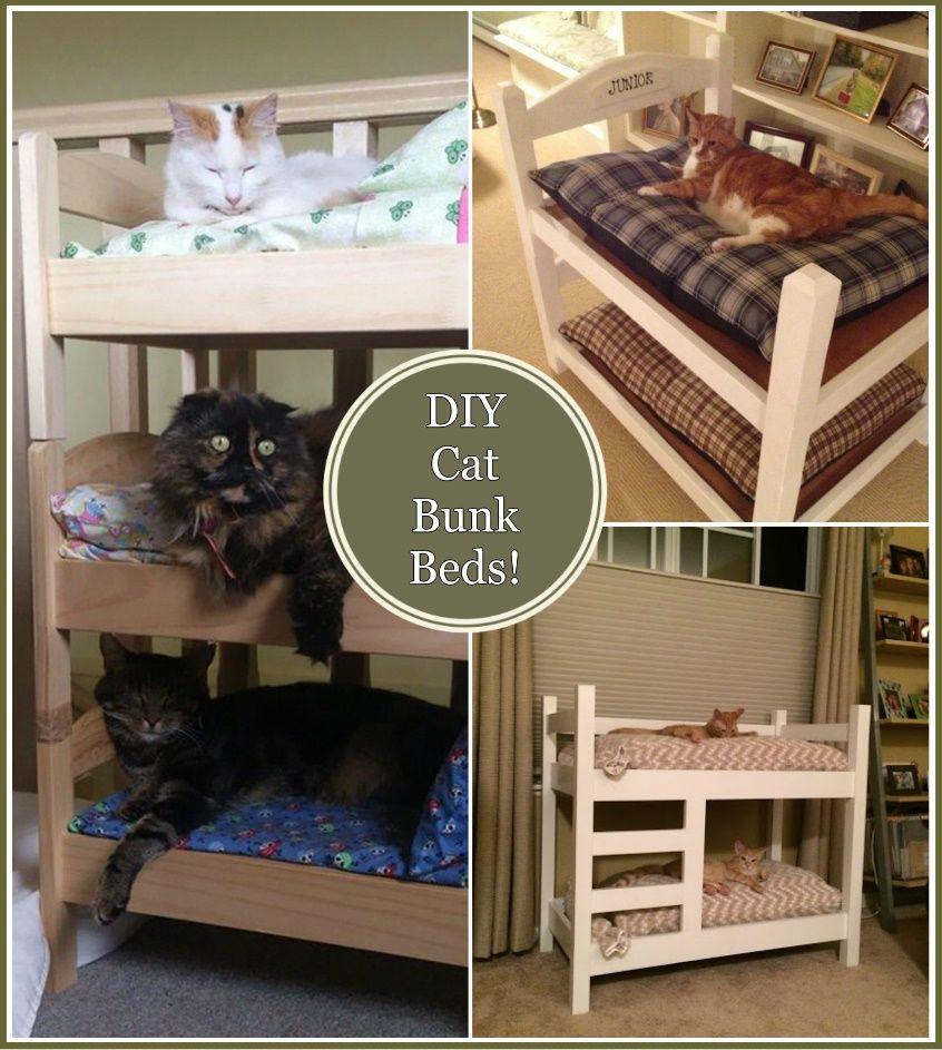 diy cat bunk beds n fy animal lovers pinterest bunk bed cat