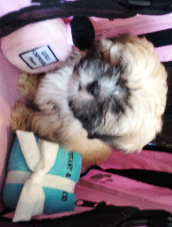 Puppies for Sale Furrylicious Pet Salon & Boutique