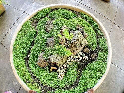Indoor small Moss Garden - Borrowed from nature