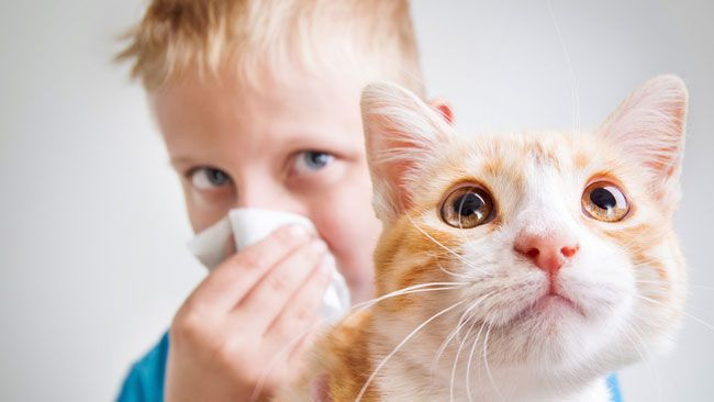 A new study suggests about 15 per cent of children who have a severe allergic reaction that involves anaphylaxis can actually have a second reaction hours after the first.