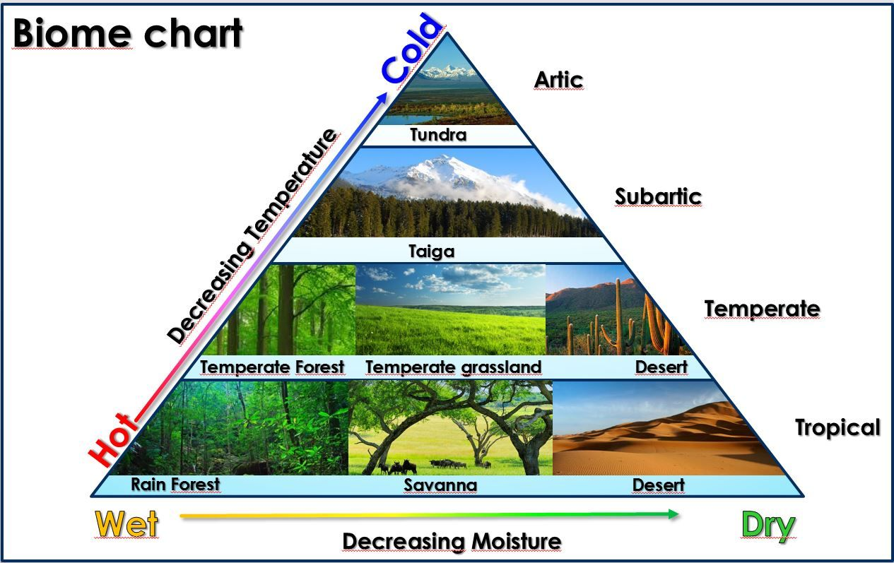Biome Chart Triangles