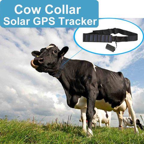 Cow Collar Solar Powered Gps Tracker Livestock Tracker