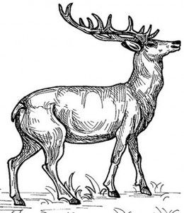 Wild Animals Kids Coloring Pages Free Colouring Pictures to Print