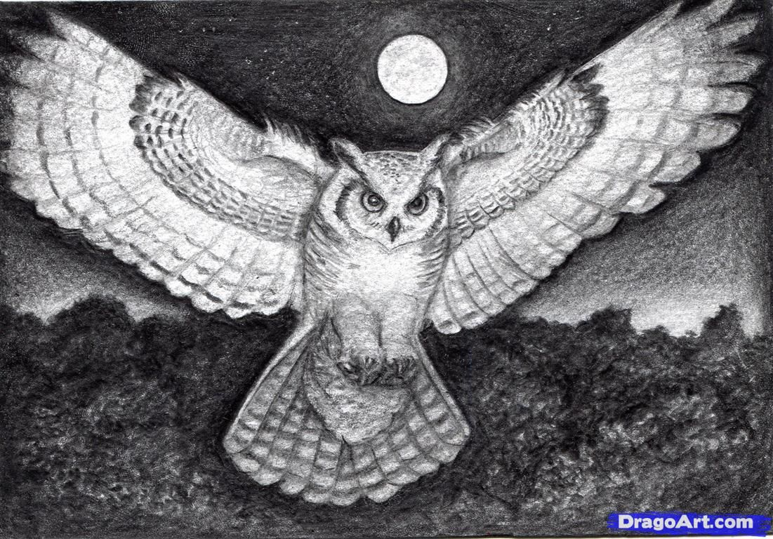 How To Draw A Realistic Owl Draw A Real Owl Step By Step Realistic Drawing Technique Free Online Drawin Owls Drawing Realistic Drawings Drawing Techniques