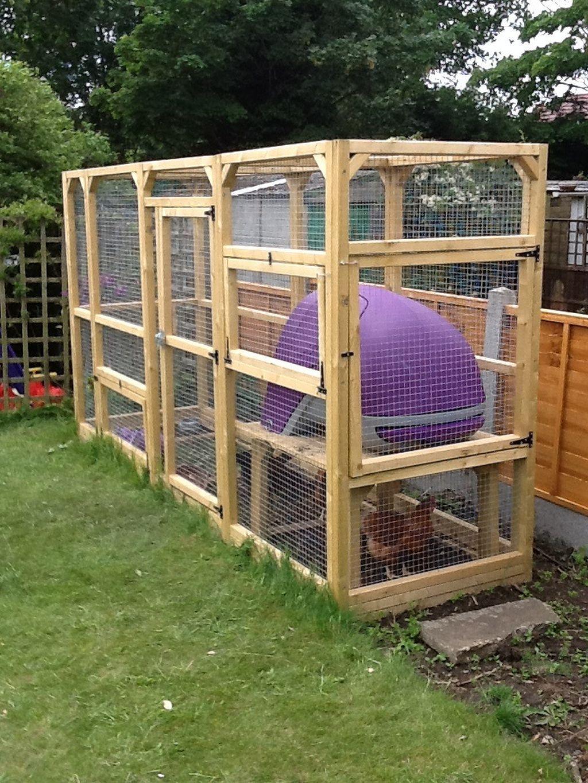 Do Backyard Chickens Involve a Lot of Work? - BackYardWay