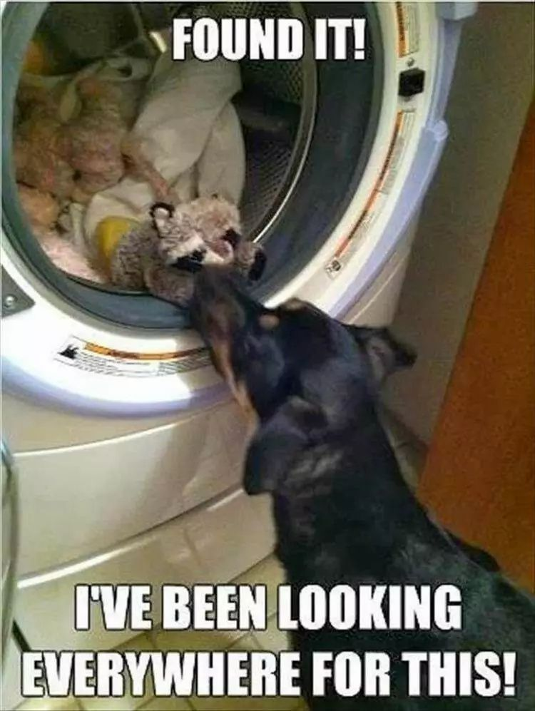 Top 20 Funny Cats And Dogs Pictures Of The Day In 2021 Funny Animals Dog Cat Pictures Cute Animal Memes