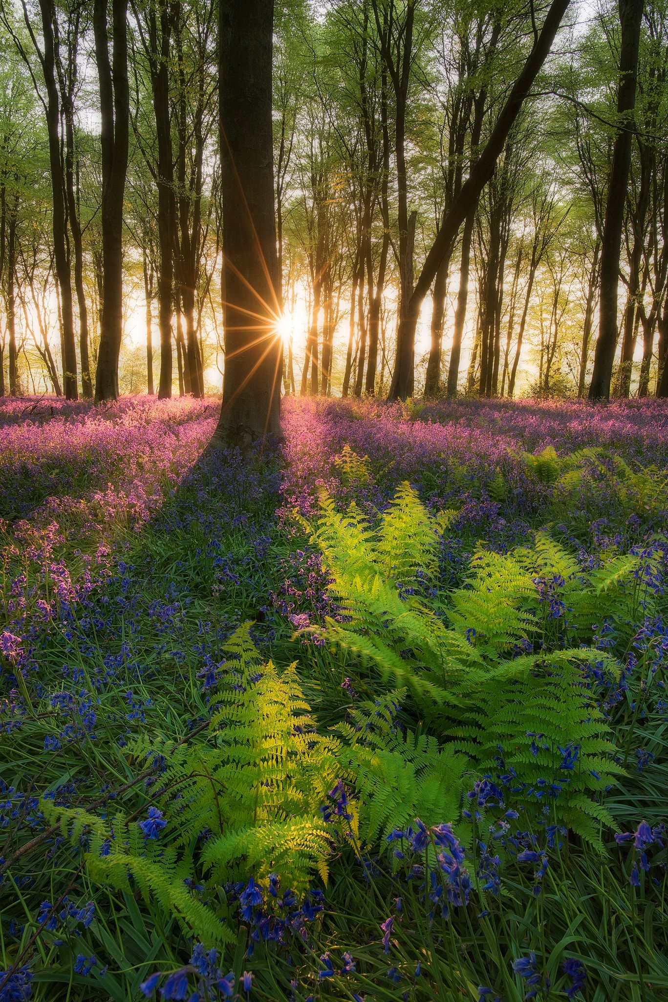 Happily Ever Real Life Fairy Tale Forests As Spring And Peak Bluebell Season Ignites Local Woodland Micheldever Nature Landscape Photos Beautiful Nature