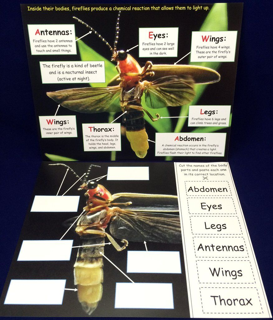 Science Activity - Learn about Fireflies Inspired by The Very Lonely