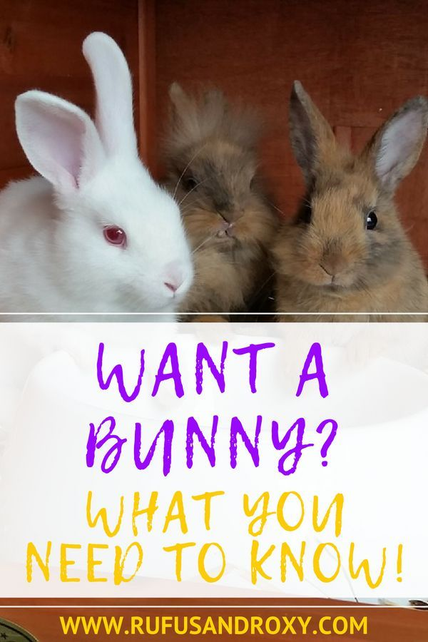 Want A Pet Rabbit 9 Things To Know Before You Get A Bunny Pet Rabbit Rabbit Adoption Bunny