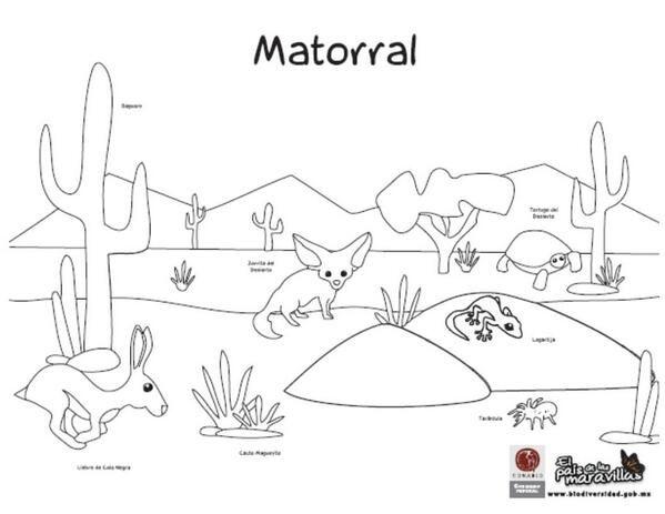 Sabana Dibujos. Dibujo Para Pintar Bisonte Dibujos Para Colorear Y ...