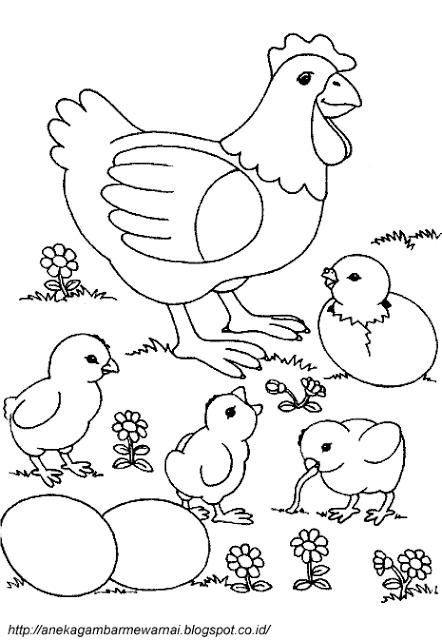 Aneka Gambar Mewarnai Gambar Mewarnai Ayam Untuk Anak Paud Dan Tk Pelajaran Menggambar Dan