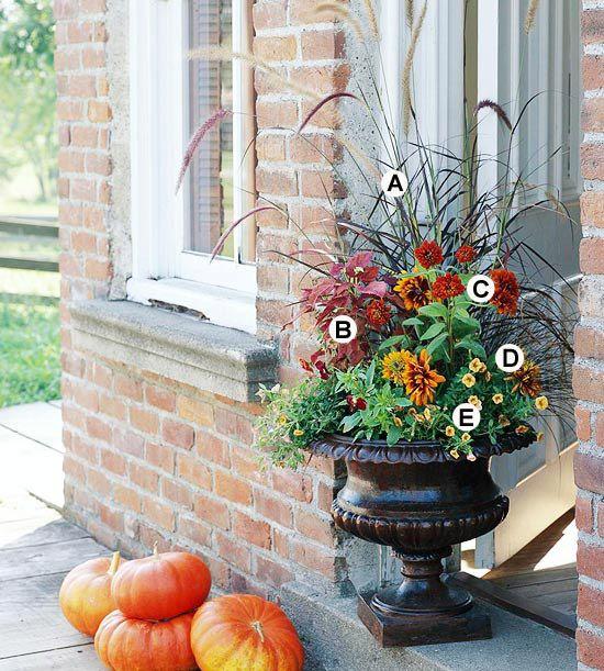 Fall Container Planting   Purple Fountaingrass (Burgundy Giant), Coleus (Sedona), Zinnia (Zesty Scarlet), Black-Eyed Susan (Cordoba), Calibrachoa (Superbells Tequila Sunrise)