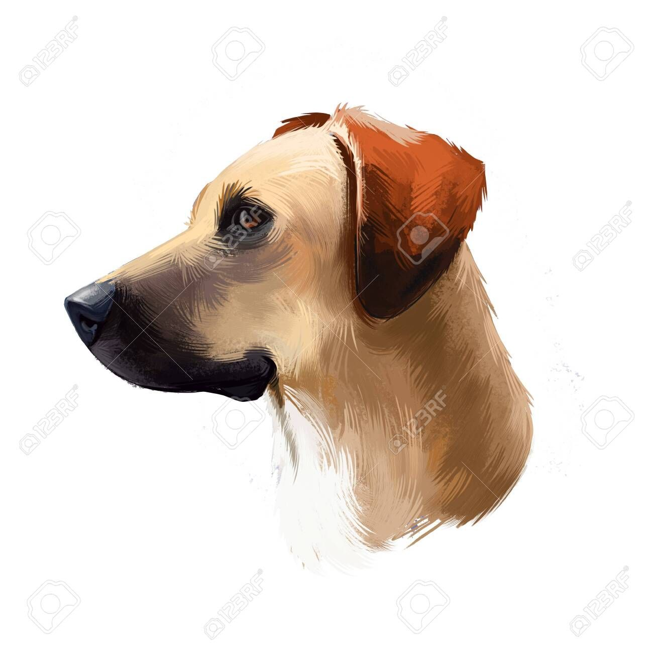 Southern Cur, Black Mouth Cur, Yellow Black Mouth dog digital art illustration isolated on white background. American origin scenthound dog. Cute pet hand drawn portrait. Graphic clip art design , #SPONSORED, #art, #digital, #illustration, #white, #isolated #blackmouthcurdog Southern Cur, Black Mouth Cur, Yellow Black Mouth dog digital art illustration isolated on white background. American origin scenthound dog. Cute pet hand drawn portrait. Graphic clip art design , #SPONSORED, #art, #digital, #blackmouthcurdog