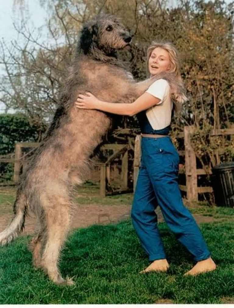 5 Hottest Facts About Giant Leonberger Dog The New Lion Extra