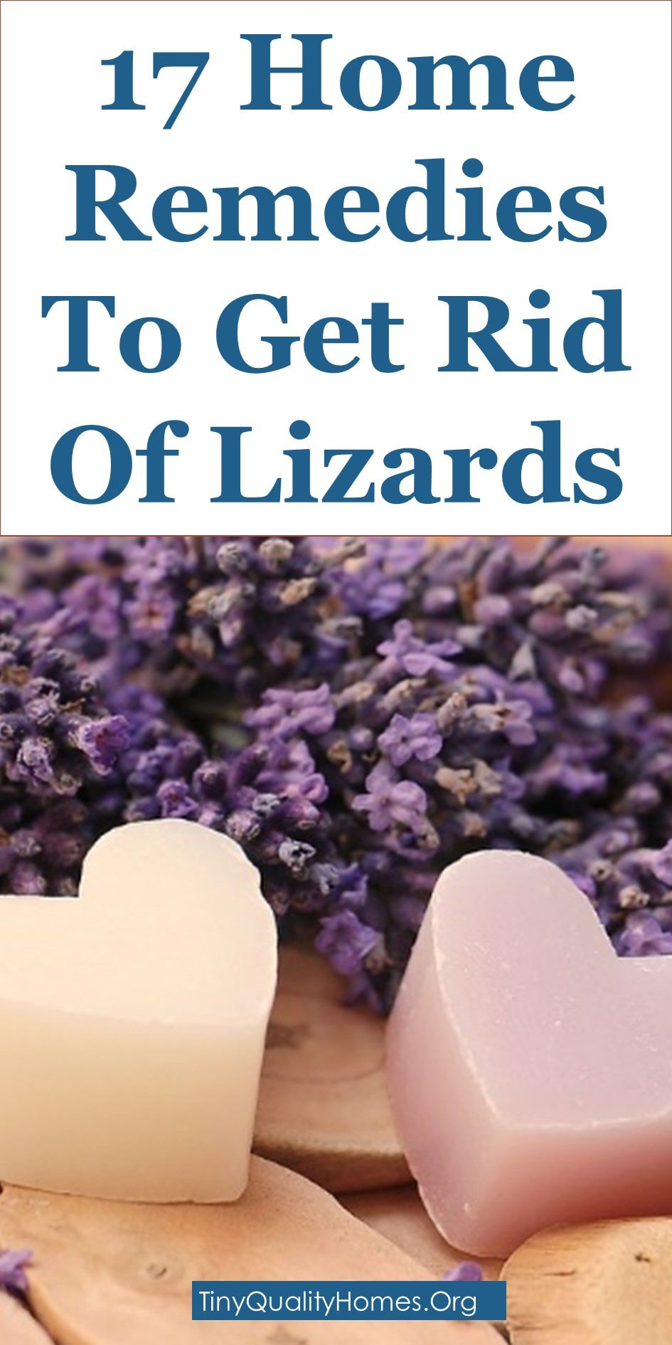 17 Home Remedies & Lizard Repellents To Get Rid Of Lizards