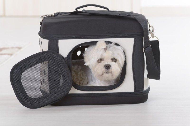 犬用キャリーバッグおすすめ人気商品22選 電車移動が楽に おしゃれなリュックタイプも キャリーバッグ リュック トートバッグ