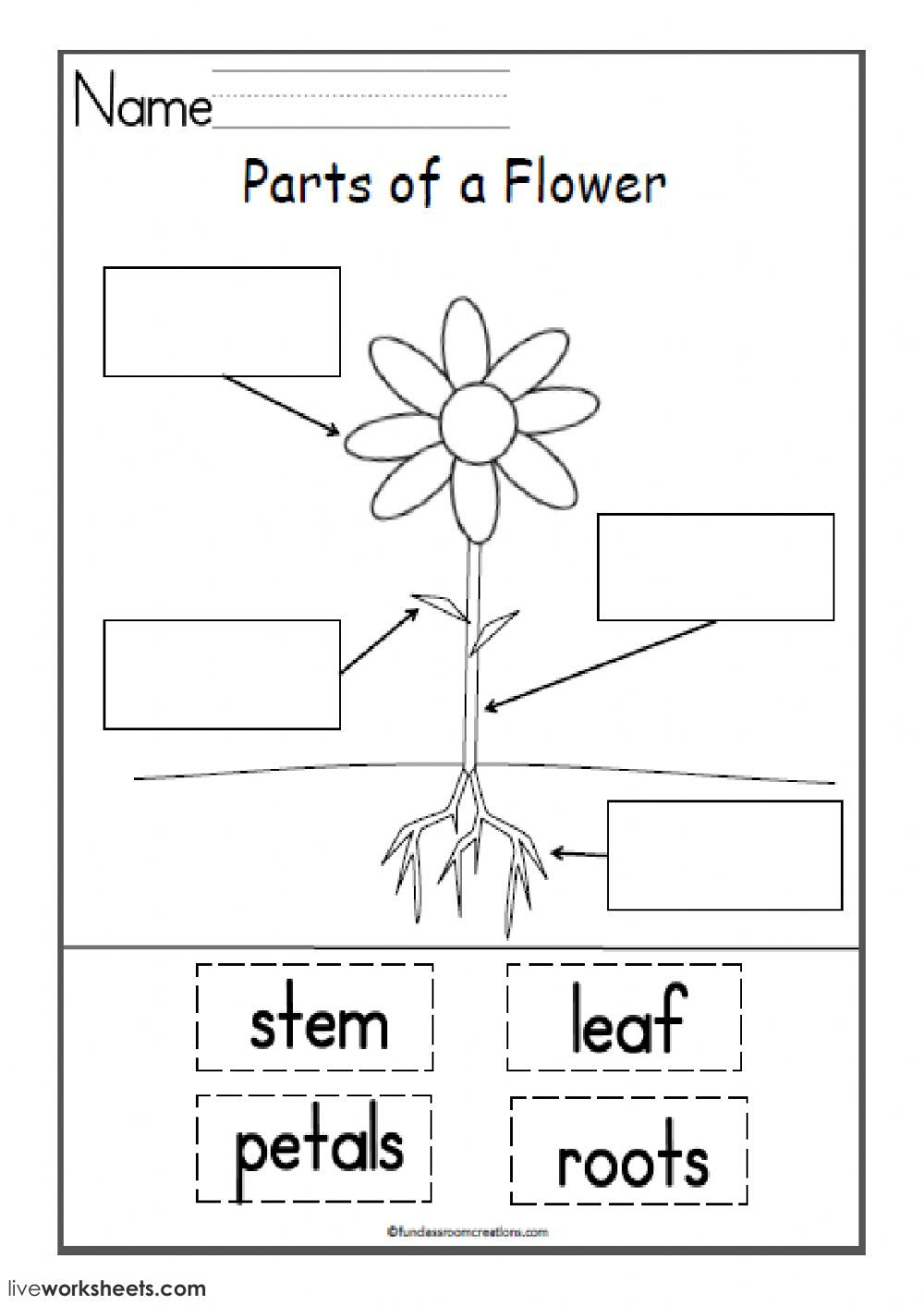 parts of the flower interactive and downloadable worksheet