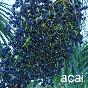 Acai Berry - Besides IBS relief, additional health benefits