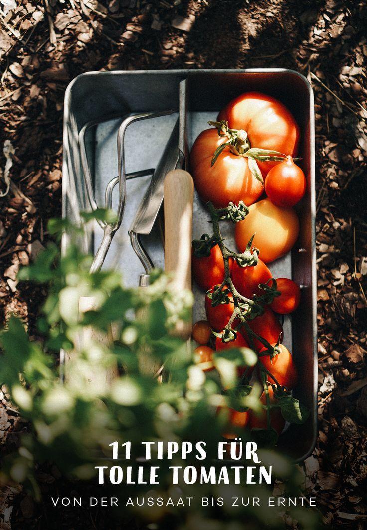 11 Tipps zum Tomaten anpflanzen #tomatenzüchten
