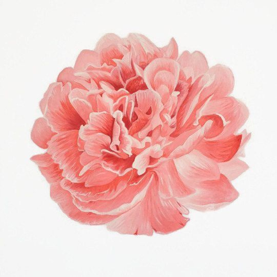 My pink peony print one of my favorite floral paintings for Painted paper flowers