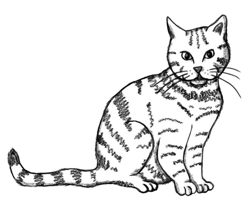 Susse Katze Zeichnen Lernen Zeichnen Pinterest Sketches