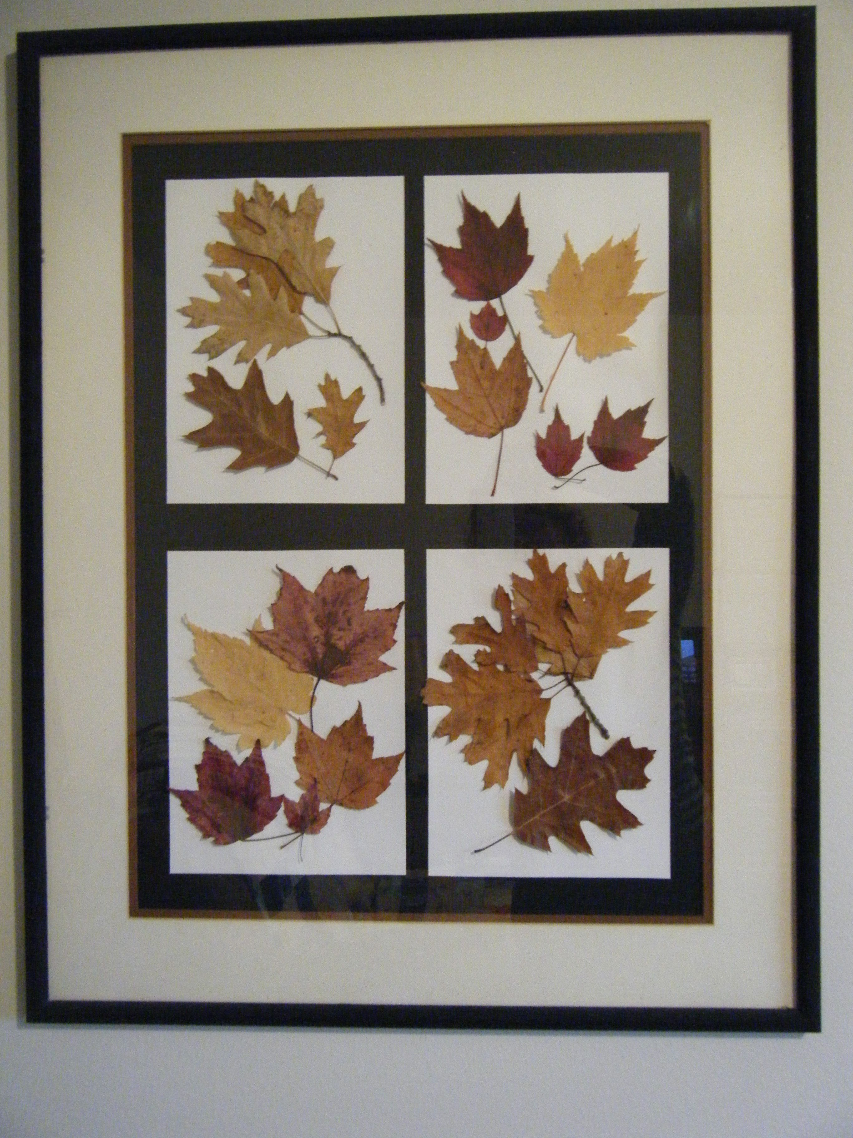 Reclaimed Frame Using Fall Leaves I Collected And Pressed Pressed Flower Crafts Pressed Flower Art Leaf Collage