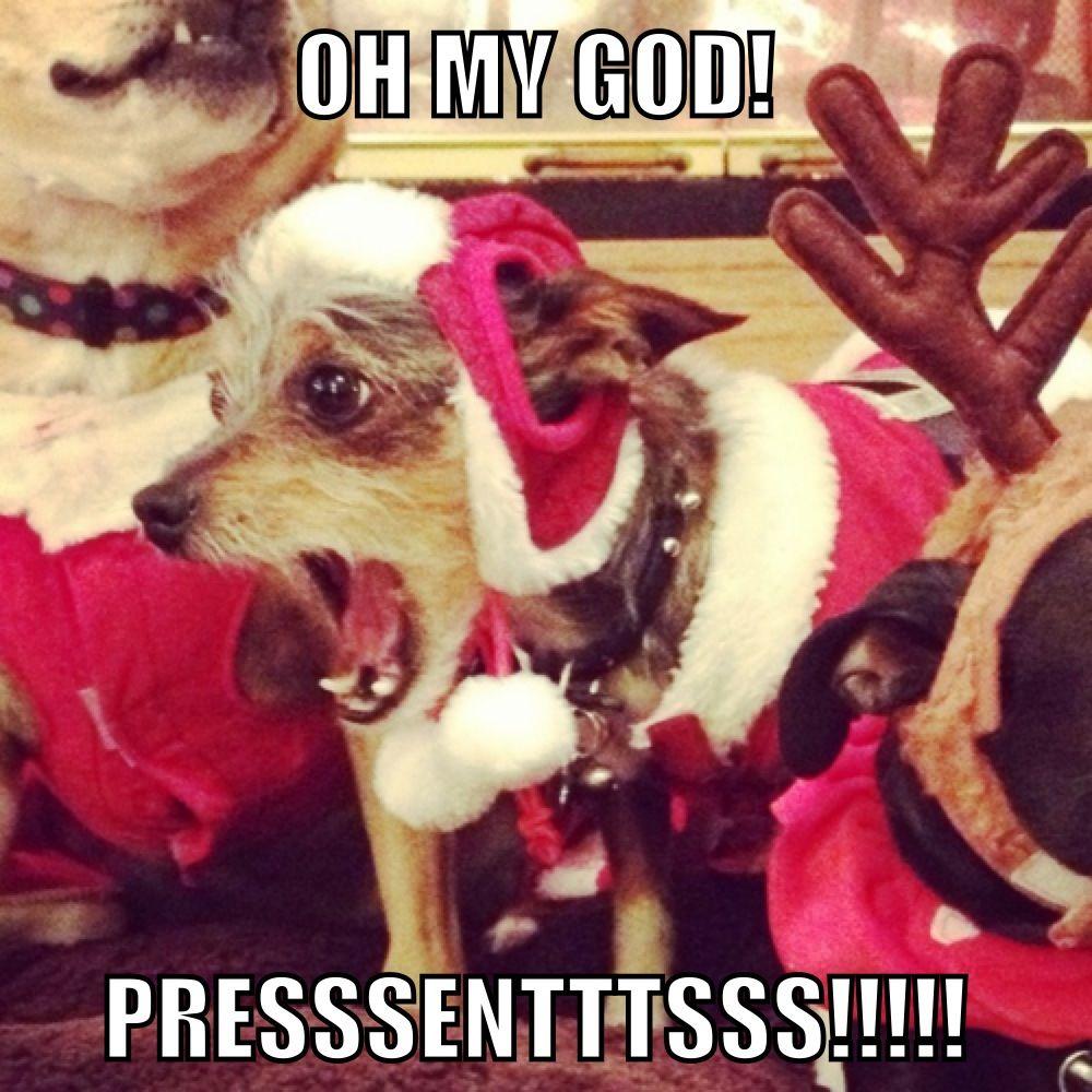 Dog Christmas Meme.Christmas Dog Meme Santa Presents Funtime Christmas Dog